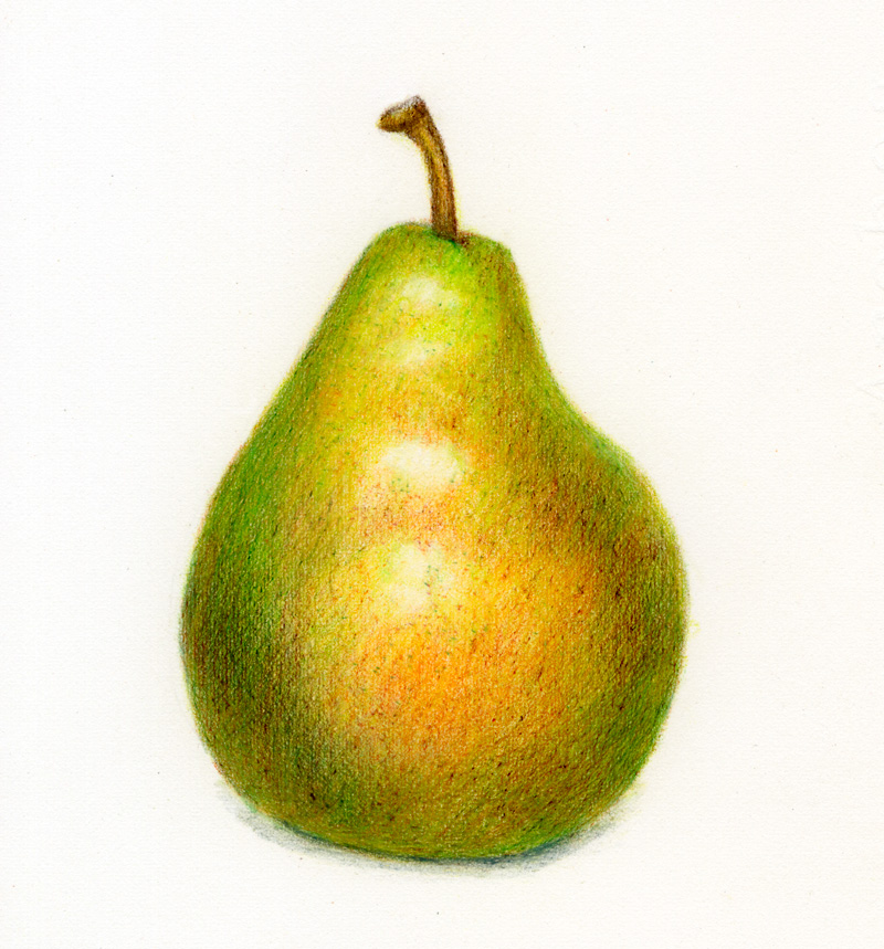 Pear Drawing | An Occasional Drawing - 252.6KB
